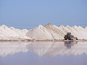 Salt Harvesting - Dry Creek