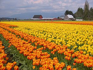 Skagit Valley 1