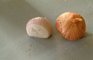 Shallots - sliced and whole