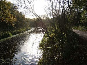 Barnsley Canal and towpath