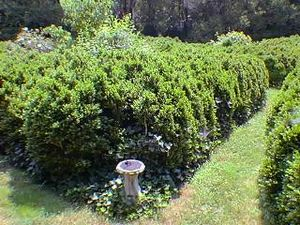 English Boxwood Maze Garden
