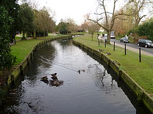 The New River, Enfield park looking north