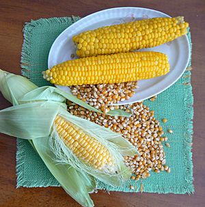 Corn-raw-boiled-and-dry