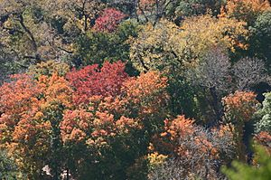 Aerial View of Autumn Forest Colors
