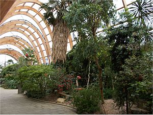 Sheffield Winter Garden - inside