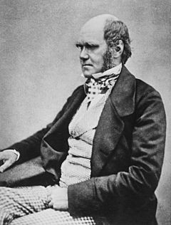 Charles Darwin seated crop
