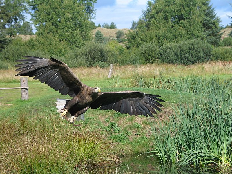 Eagle In Flight 2004-09-01