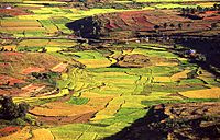 terraced emerald rice paddies checker softly rolling hills