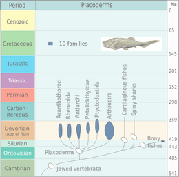 Evolution of placoderms