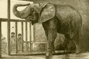 Jumbo greets visitors in London Zoo