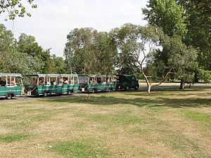 Tourist train of buses in Kew Gardens - geograph.org.uk - 215054