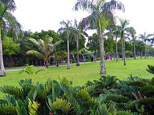 Royal Palm Trees in Daan Park East Part