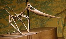 Grounded Pteranodon