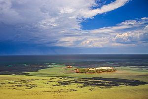 Shark Bay, WA, home of a lot of sea grass and happy Dugongs - (13113483083)