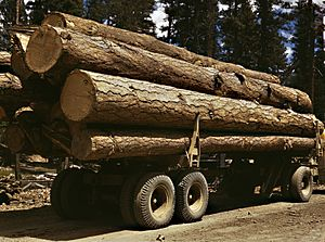 Truck load of ponderosa pine, Edward Hines Lumber Co, operations in Malheur National Forest, Grant County, Oregon, July 1942