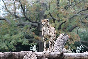 National Zoological Park The Cheetah Conservation Station
