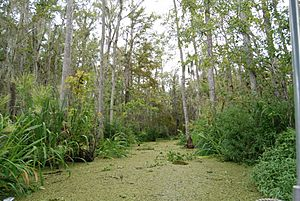Honey Island Swamp, Louisiana (paulmannix)