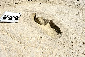 Fossil footprint, Harlan's ground sloth, White Sands National Park, New Mexico, United States