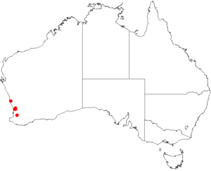 Darwinia pimelioidesDistMap29.png