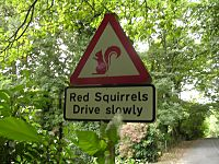 Red squirrels warning signs, Lake District