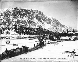 Packtrains carrying freight alongside One Mile River between Bennett Lake and Lindeman Lake, British Columbia, 1898 (HEGG 565)