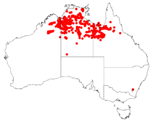 Eucalyptus pruinosa Distribution Map.png