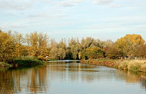 Autumn colours on the River Nene near Sutton - geograph.org.uk - 1563755
