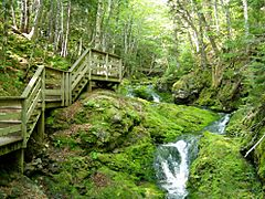 Fundy National Park of Canada 9