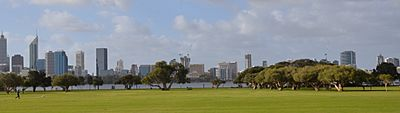 Perth city skyline and melaleucas