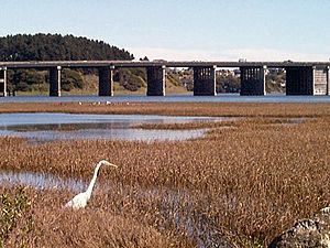 Bothin Marsh in Marin County California