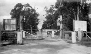 Gate in the Rabbit Fence at Stanthorpe, Christmas 1934f