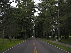 Saratoga State Park Avenue Pines 01Aug2008