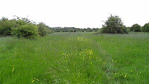 Islip Manor Meadows 6