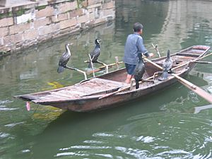 Cormorant fishing -Suzhou -China-6July2005