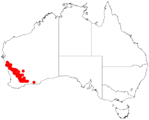 Acacia dielsiiDistMap288.png