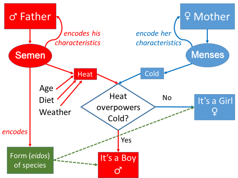 Aristotle's model of Inheritance