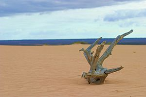 Driftwood at Mungo National Park