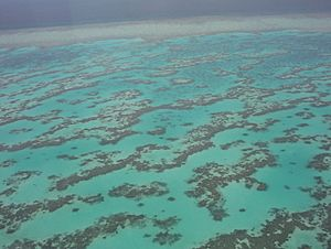 Part of Great Barrier Reef from Helecopter
