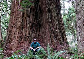 Iluvatar redwood 400