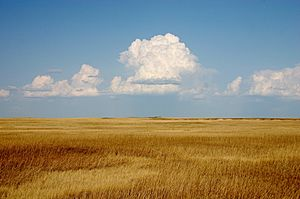 Cumulus Clouds over Yellow Prairie2