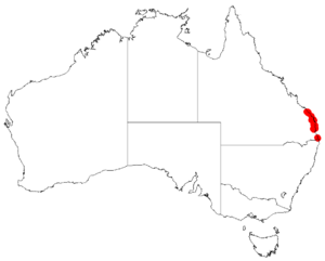 """Acacia attenuata"" occurrence data from Australasian Virtual Herbarium"