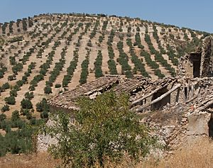 Almond trees, ruined house, Andalusia, Spain