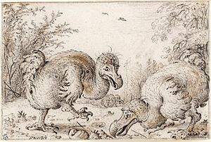 Roelandt Savery - 'Dodo Birds', Chalk, black and amber on cream paper