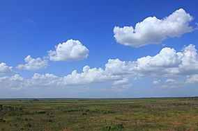 Paynes Prairie observation tower view.jpg