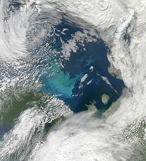 Barents Sea in Bloom