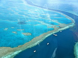 Amazing Great Barrier Reef 1