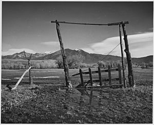 Taos County, New Mexico. Fence construction at Los Cordovas. This is vega land, as is much land ad . . - NARA - 521936