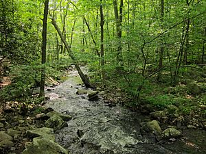 Posts Brook from Norvin Green State Forest Lower Trail.jpg