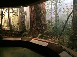 Mixed Deciduous Forest, Hall of North American Forests, AMNH
