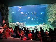 Sydney Sea Life Aquarium (32423380775)